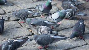 Consumición de palomas en la calle