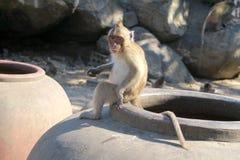 Consumición del bebé del mono con la cara divertida Fotos de archivo