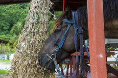 Consumición del caballo Imagenes de archivo