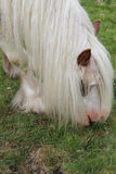 Consumición del caballo salvaje Foto de archivo