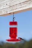 Consumición del colibrí Imagen de archivo libre de regalías