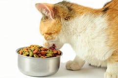 Consumición del gato Foto de archivo libre de regalías