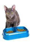 Consumición del gato imagenes de archivo