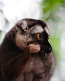 Consumición del mono fotografía de archivo libre de regalías