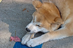 Consumición del perro fotos de archivo
