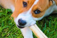 Consumición del perro Fotografía de archivo libre de regalías