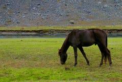 Consumición negra del caballo Imagen de archivo