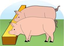 Consumición de los cerdos Imágenes de archivo libres de regalías