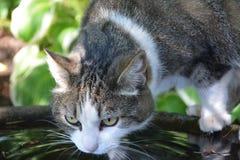 Consumición del gato Imagen de archivo