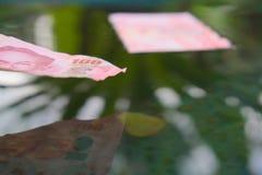 A conta sobre a superfície da água Fotos de Stock Royalty Free