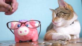 Contabilidad empresarial video divertida de las finanzas del concepto del dinero del trabajo en equipo de la hucha y del gato Ani almacen de metraje de vídeo