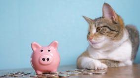 Contabilidad empresarial video divertida de las finanzas del concepto del dinero del trabajo en equipo de la hucha y del gato Ani metrajes