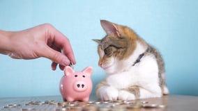 Contabilidad empresarial video divertida de las finanzas del concepto del dinero del trabajo en equipo de la hucha y del gato Din almacen de metraje de vídeo