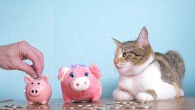 Contabilidad empresarial video divertida de las finanzas del concepto del dinero del trabajo en equipo de la hucha y del gato Din almacen de video