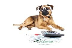 Contable del perro Foto de archivo libre de regalías
