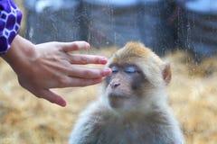 Contact avec un animal Personne et animal Images stock