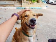 contact de main d'homme sur la tête de chien Photo stock