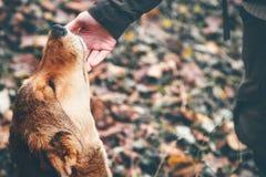 Contact de main heureuse de chien et de femme extérieur Image libre de droits