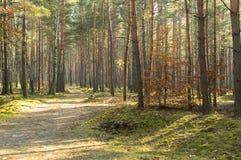 Contact de ressort dans la forêt Photographie stock libre de droits