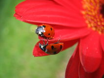 Contact de surprise Photos stock