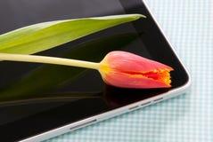 Contact de tablette avec la tulipe Image stock