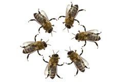 Contact des abeilles image stock