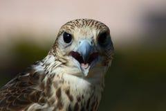 contact hawk стоковая фотография
