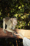 Contact with monkey Royalty Free Stock Photo