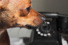 Contact our dogstore please! royalty free stock photography