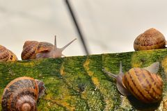 Contact of two snails talking Royalty Free Stock Photography