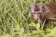 Contact visuel de singe de bébé Photos stock