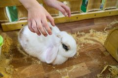 Contact Zoo. Baby hands reach out to pet pet stock photography