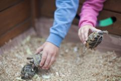 Contact zoo, turtles in kids hands. Children contact exotic zoo, toddler girl and boy friends holding little turtle Stock Photos