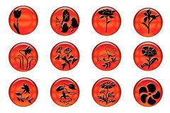 Contactos de las flores Imagen de archivo