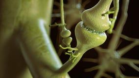 Contacts synaptiques entre le rendu des neurones 3D illustration de vecteur