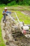 Contadino nel giacimento del riso fotografie stock libere da diritti