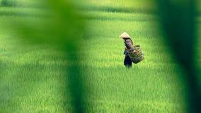 Contadino sul giacimento del riso in valle di PA del Sa nel Vietnam Immagini Stock