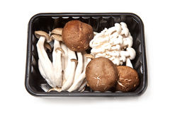 Container of Asian Mushrooms Royalty Free Stock Photos
