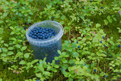 The container with bilberry Royalty Free Stock Images