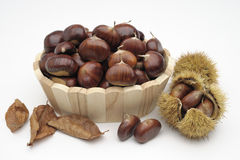 Container with chestnuts and curls Stock Photo