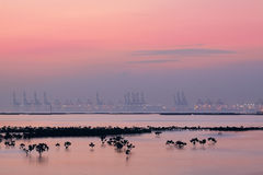 Container cranes on a foggy morning Stock Photography