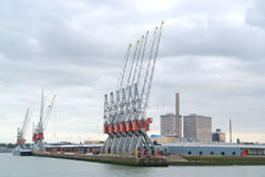 Container cranes at the port Stock Photography
