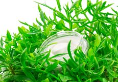 Container of cream. In green leaves Royalty Free Stock Images