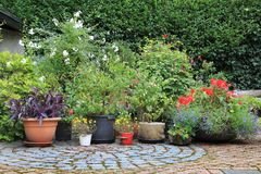 Container flower garden stock images
