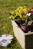 Container Garden Stock Photos