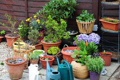 Container gardening Stock Image