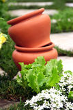 Container gardening collection Stock Images