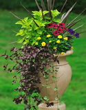 Container Gardening. A greek style garden container featuring an interesting combination of foliage plants,flowers, and trailing vines Stock Photo