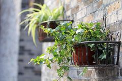 Container gardening potted plant Stock Images