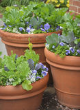 Container Gardening Royalty Free Stock Images